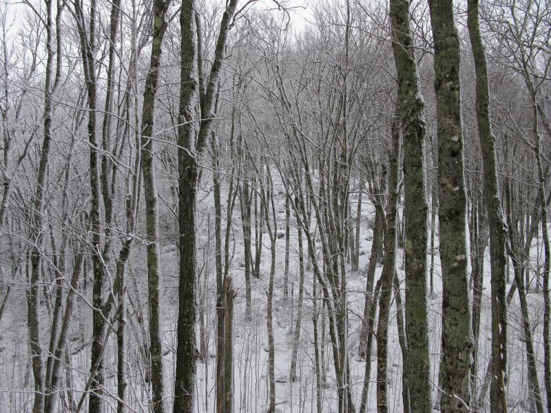 Snowy woods and hill