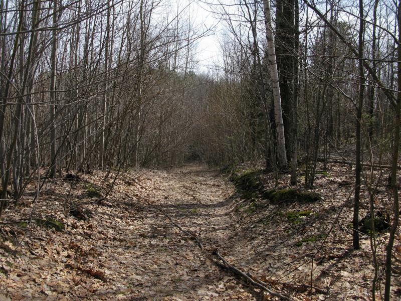 Quaint little track leading into the woods
