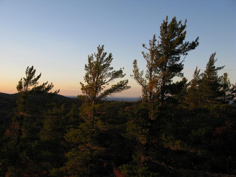 View of Lake Superior through the tall pines