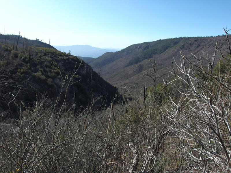First look down Coon Creek drainage