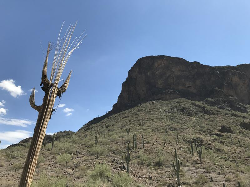 Gazing up at the cliffs on Picacho Peak