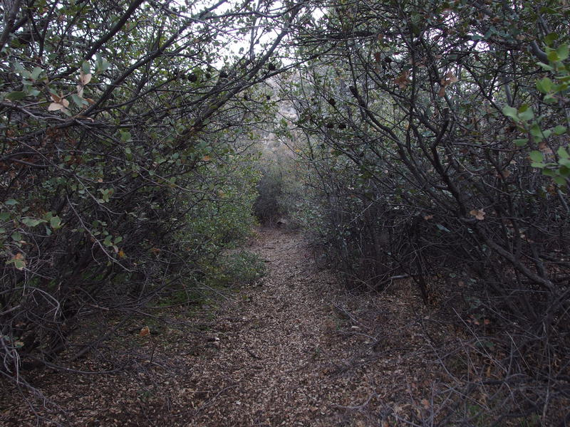 Pleasant, enclosed section of trail