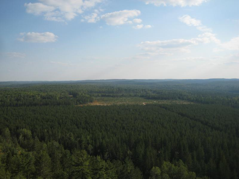 Looking south over planted forests