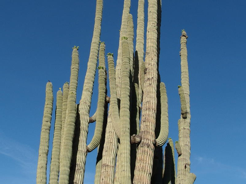 Massive cactus near Reed's Water