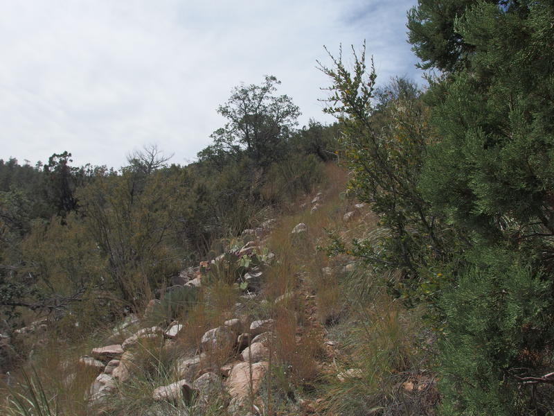 A grassy, rocky trail up to the saddle