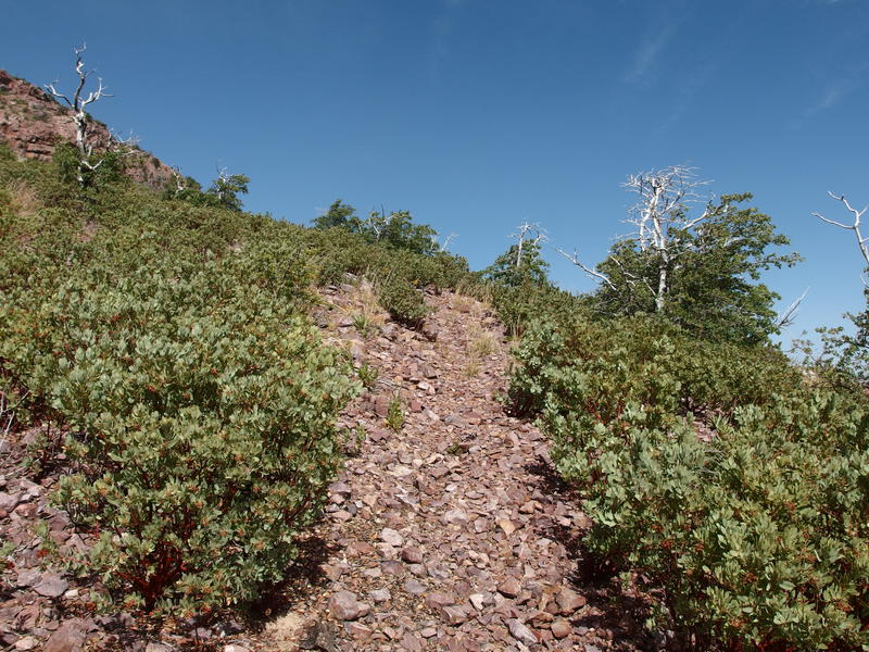 Loose rock trail through manzanitas