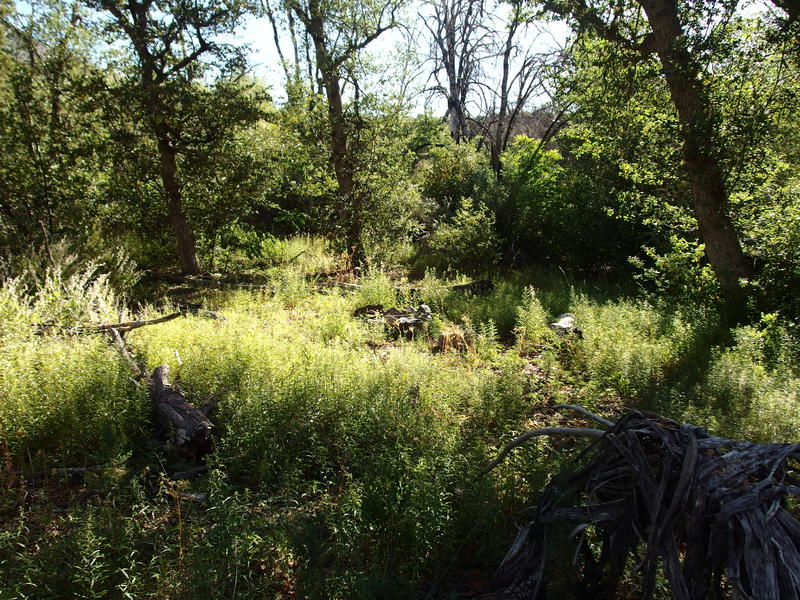 Overgrown campsite at Squaw Flat