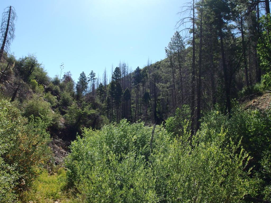 Blog   South Mazatzal Roundup: Cornucopia - Thicket Spring Loop