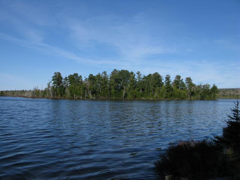 Forested island on Schlatter Lake