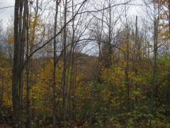 Hiding outcroppings in the fall colors