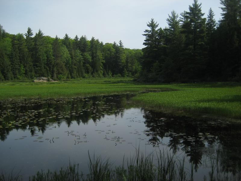 Grassy Stager Lake