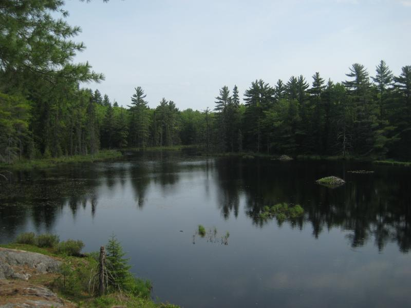 Large beaver pond below Stager Lake