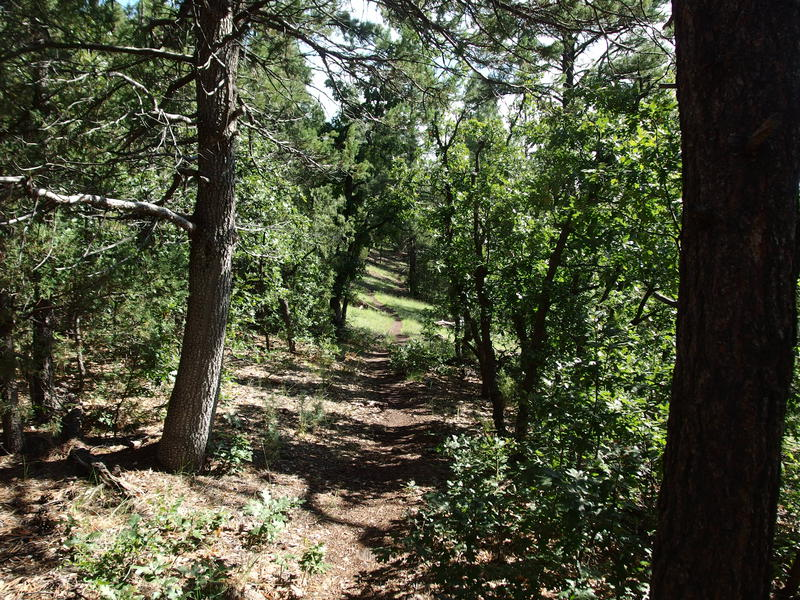 Pleasant wooded trail