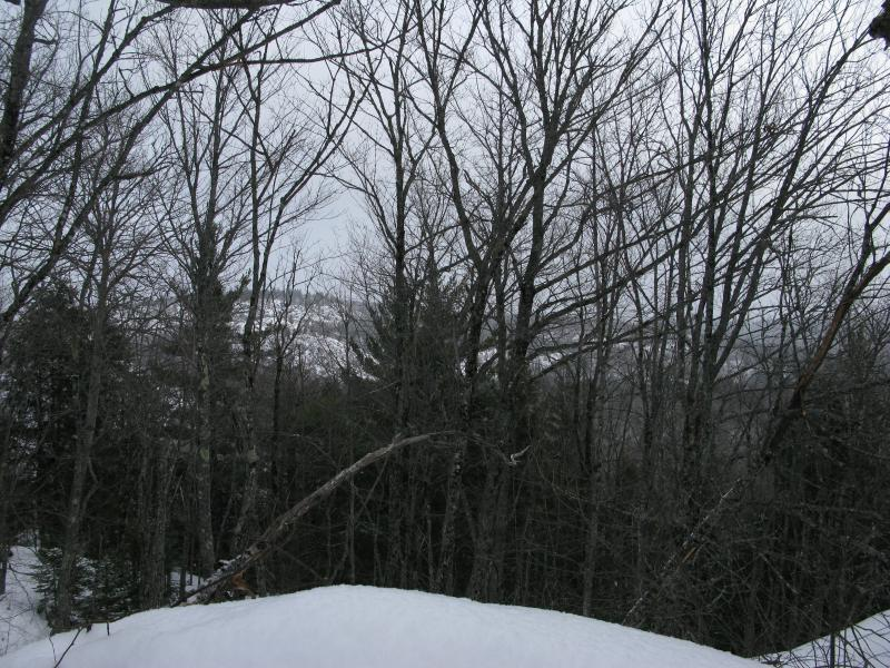 Superior Mountain through the Trees