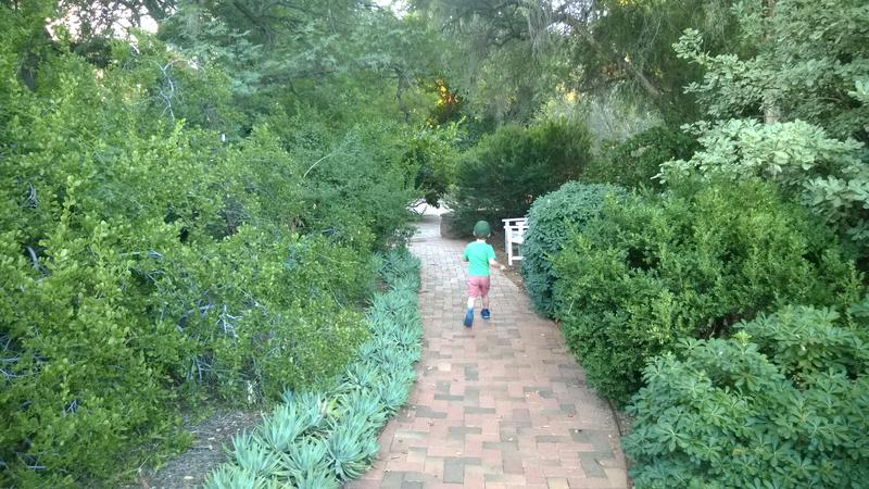 Noah running ahead in the rose garden