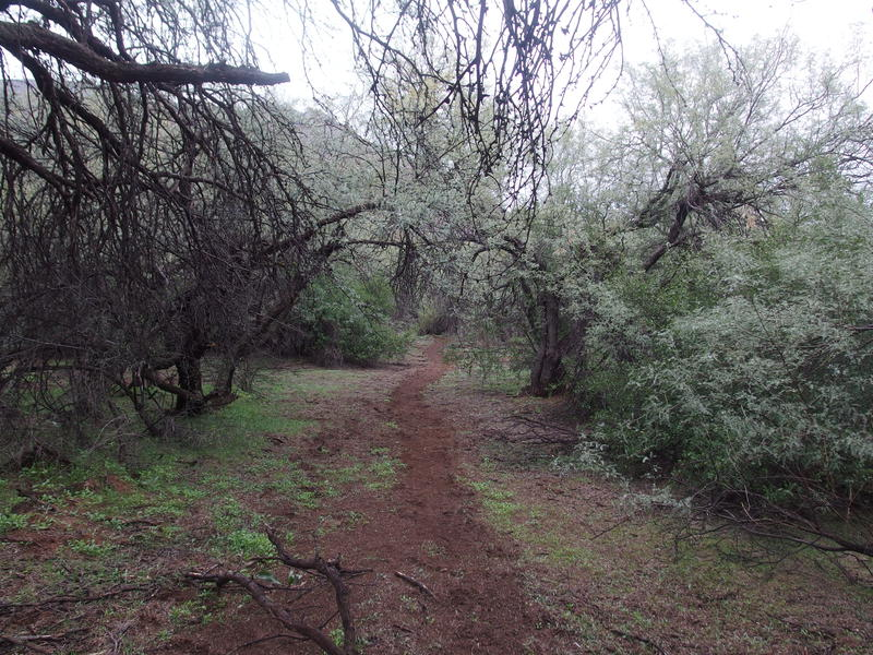 Dreamy walking along the Verde River Trail
