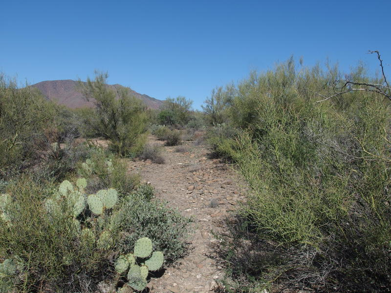 Narrow trail in a lush desert mesa
