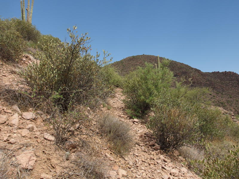 A hot trail up towards Tim's Saddle