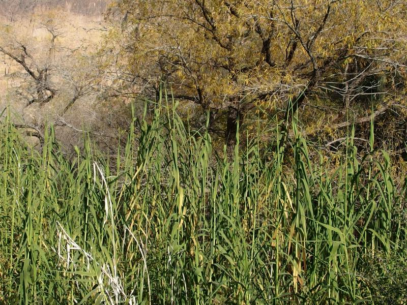 Thick reeds clustered around Second Water
